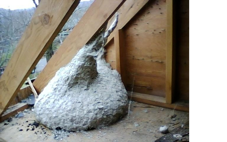 Scary attics need insulation, too! | GreenHomes America