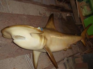 Sharks: A major safety concern in attics